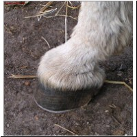 Hoof care is important !