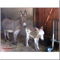 Beliebt Bevorzugt Esel-Online.de « #QI_08