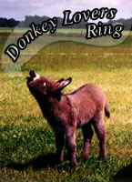 Donkey Lovers Web Ring - Feivel (12,1 KB)